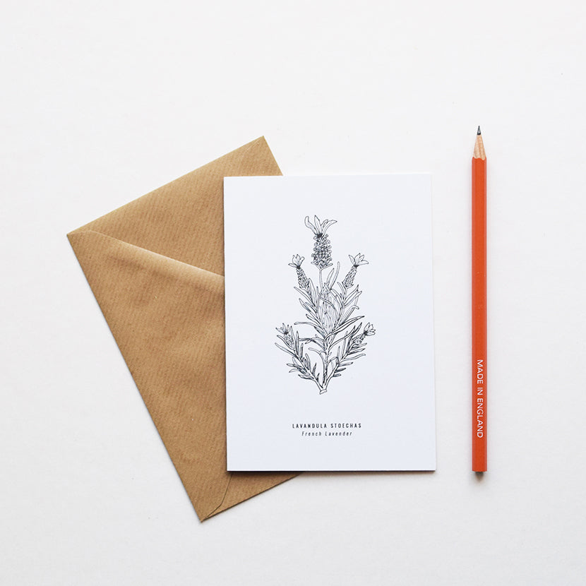 Inspired by Victorian botanical illustrations and vintage apothecary style this beautiful French Lavender / Lavandula Stoechas drawing is one of a set of eight greeting card designs by Alfie's Studio. It is printed on a crisp white background and comes with a craft envelope.