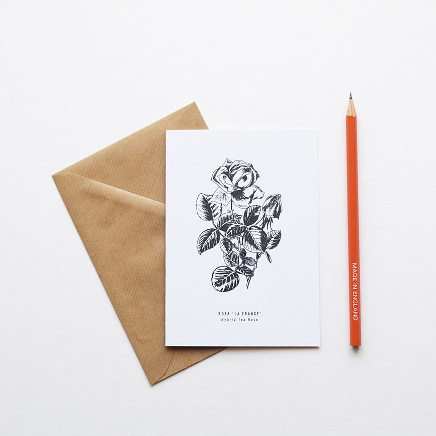 Greeting cards inspired by Victorian botanical illustrations and vintage apothecary style | This beautiful Hybrid Tea Rose / Rosa 'La France' drawing is one of a set of eight greeting card designs by Alfie's Studio. It is printed on a crisp white background and comes with a craft envelope.