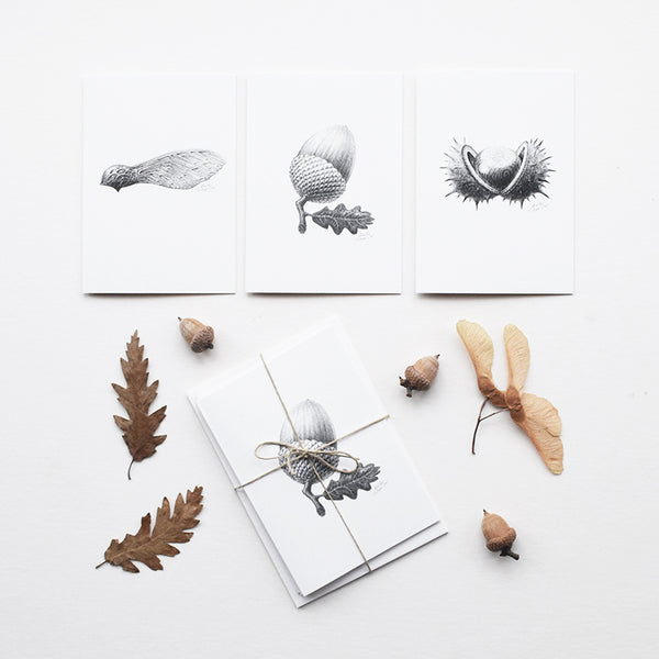 This set of greeting cards features three of the original pencil drawings from the 'Technature' range; 'Acorn', 'Sycamore Seed' and 'Horse Chestnut' by Malcolm Trollope Davis.