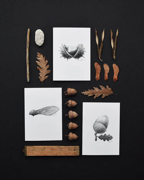 'Acorn' greeting card, designed and printed in the UK, features one of the original pencil drawings from the 'Technature' range by Malcolm Trollope Davis