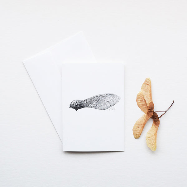 'Sycamore Seed' greeting card, designed and printed in the UK, features one of the botanical pencil drawings from the 'Technature' range by Malcolm Trollope Davis.