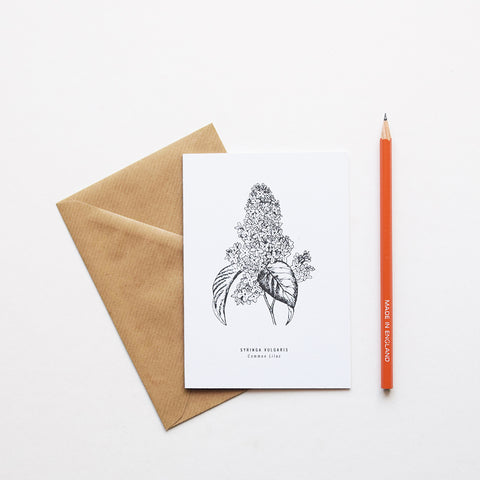 nspired by Victorian botanical illustrations and vintage apothecary style this beautiful Common Lilac / Syringa Vulgaris drawing is one of a set of eight greeting card designs by Alfie's Studio. It is printed on a crisp white background and comes with a craft envelope.