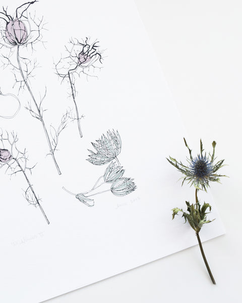 A beautiful art print of delicate wildflowers featuring some native plants to the British Isles by Anna's Drawing Room.