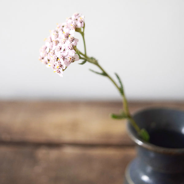 yarrow, Daily cleansing ritual, magic organic apothecary, MOA London, natural skincare