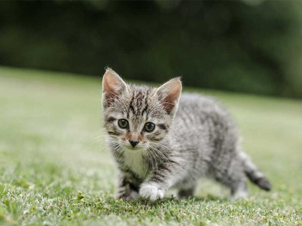 Kitten Eye Infection: Neosporin's Usage