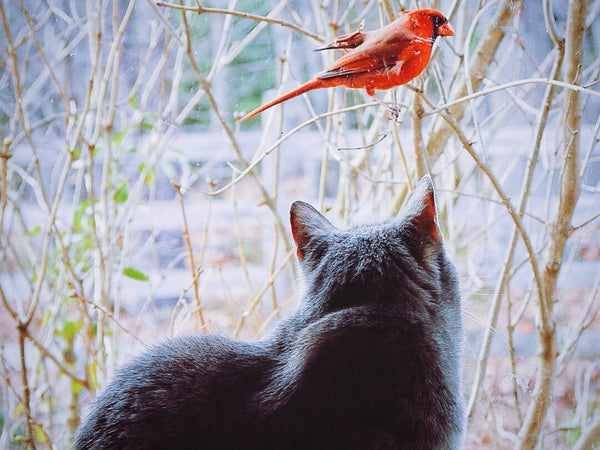 Can Birds Eat Cat Food