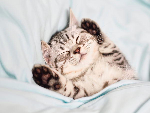 Kitten Sleeping A Lot, Not Playing