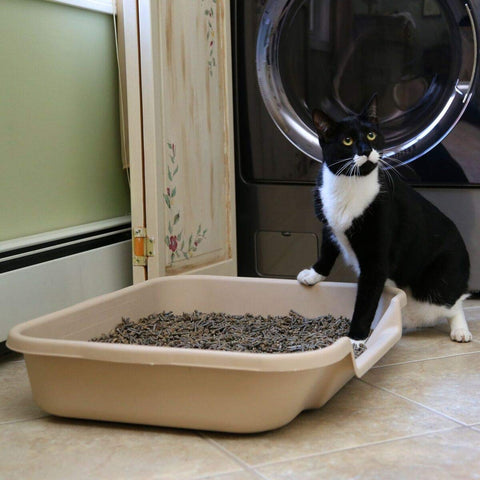 Cat Scratches Sides Of Litter Box