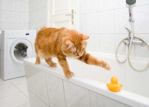 Cats Pooping In Bathtub Repeatedly