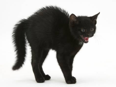 Let's put your efforts in keeping the black fur for your cats