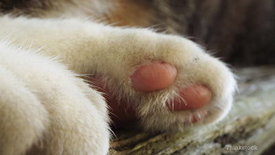 Causes of pat paw infection