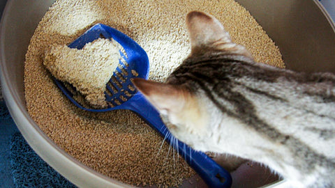 Cat Litter That Doesn't Stick To Paws: Characteristics And Suggestions