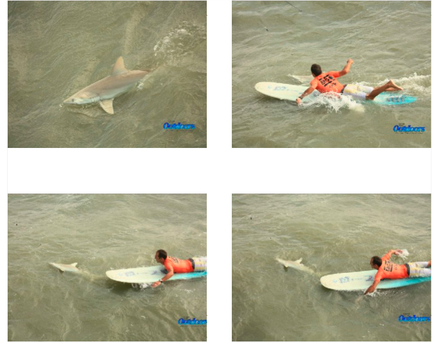 Teamrider Encounters Shark in Surf Contest