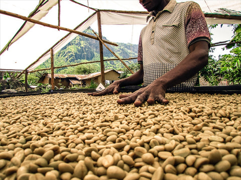 New Ground Coffee B Corp Month March 2021