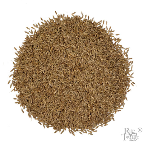 Cumin Seeds - Rare Tea Cellar