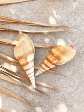 Collection of Vintage Seashells