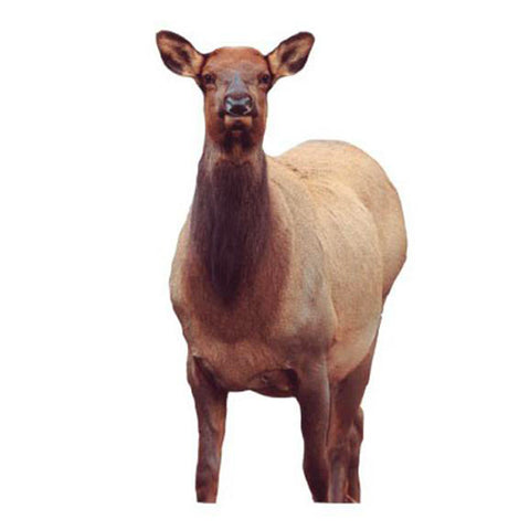 Montana Decoy Fred Eichler Cow Elk Decoy by Montana Decoy Co. | Gear - goHUNT Shop