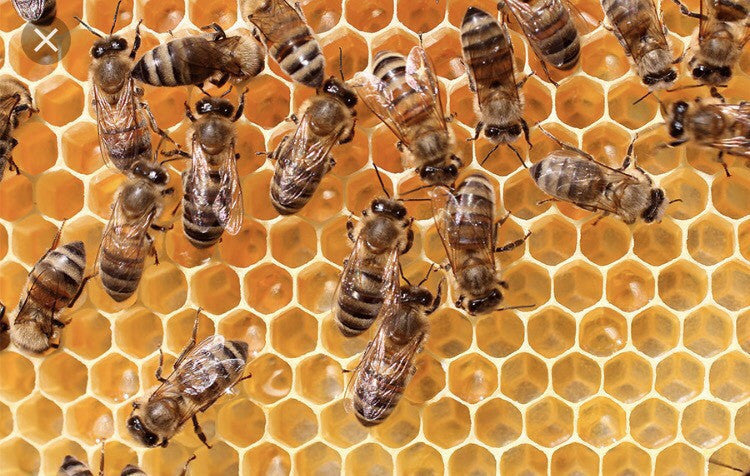 Swissx reveals source of organic bee pollen in its CBD oil