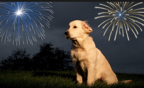 Fido and Fireworks: How CBD Can Help Your Dog Survive the Fourth of July