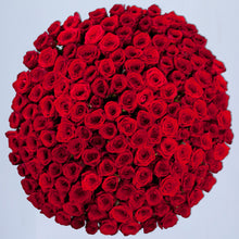 100 Fresh Cut Red Rose Bouquet, Grand Gesture, 100 Red Roses, Luxury Red Roses, Red Roses, 100 Red Roses Delivered  - Crystal Roses London