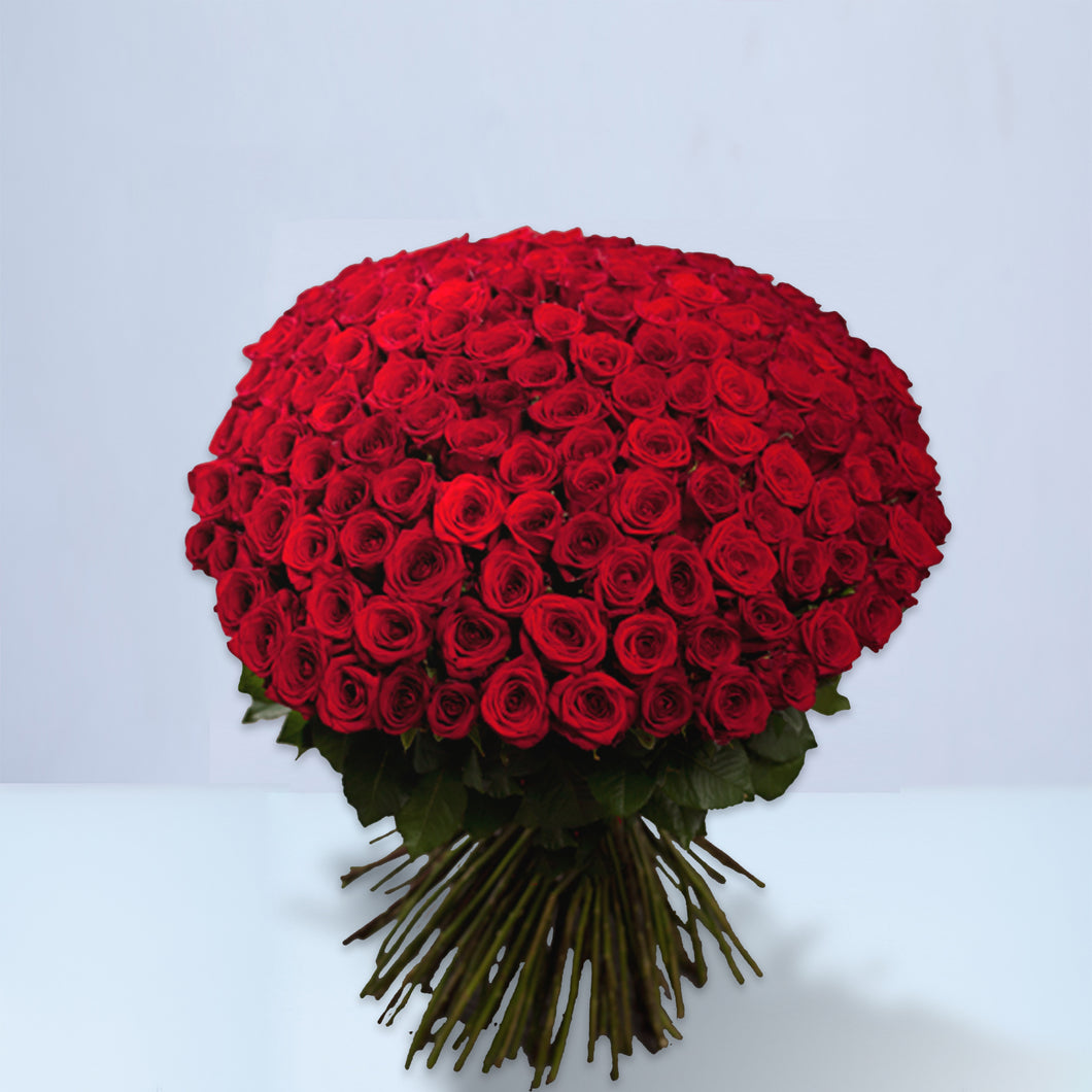 100 Fresh Cut Red Rose Bouquet, Grand Gesture, 100 Red Roses, Luxury Red Roses, Red Roses, 100 Roses, Valentine's Day roses, Valentine's day, 100 Red Roses Delivered  - Crystal Roses London