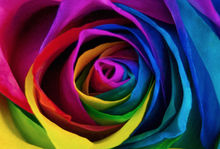 10 Rainbow Letter Box Roses