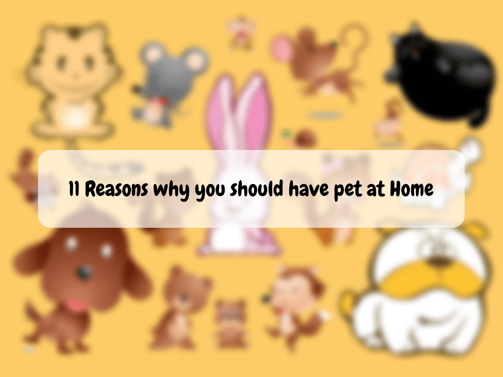 11 Reasons why you should have a pet at Home