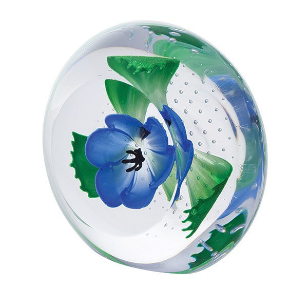 Caithness Glass Limited Edition Blue Anemone Windflowers Paperweight