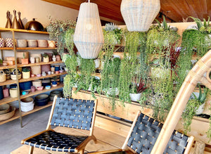Creating a Desert Oasis Plant Wall Inside Acme 5 Lifestyle