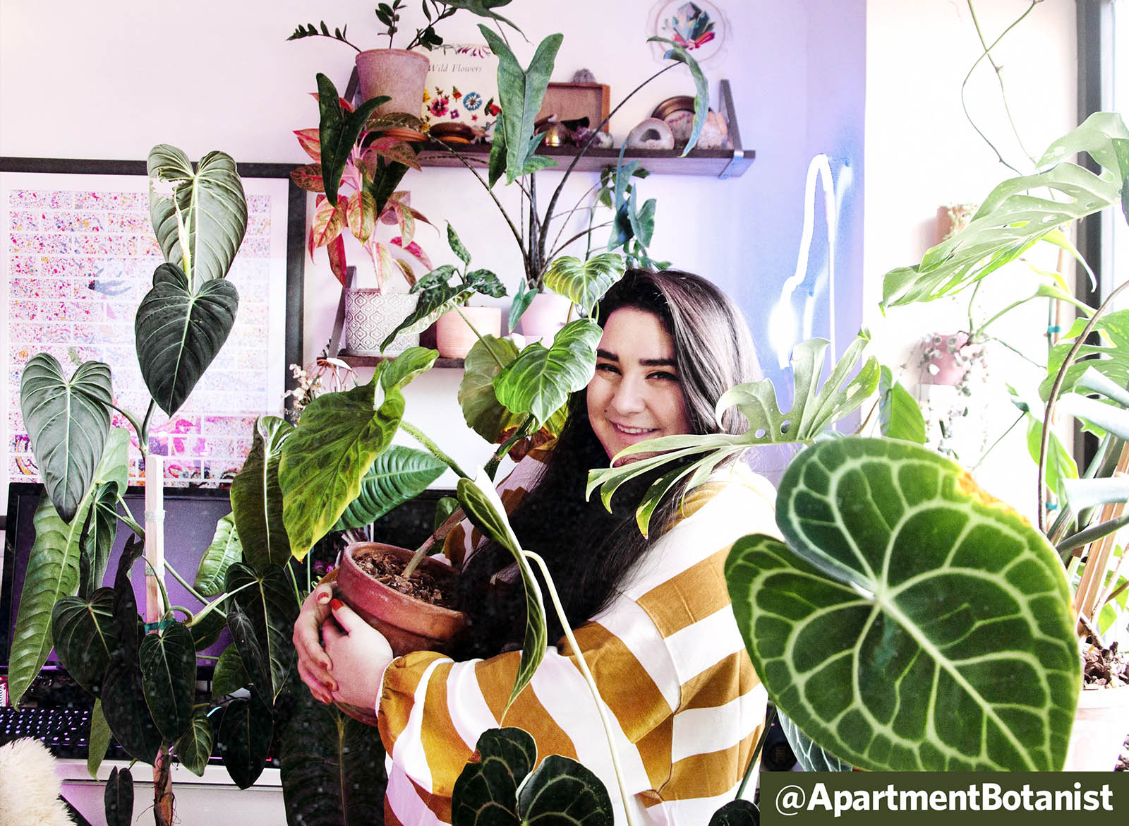Q&A: Rare Plants and Humidity with @apartmentbotanist