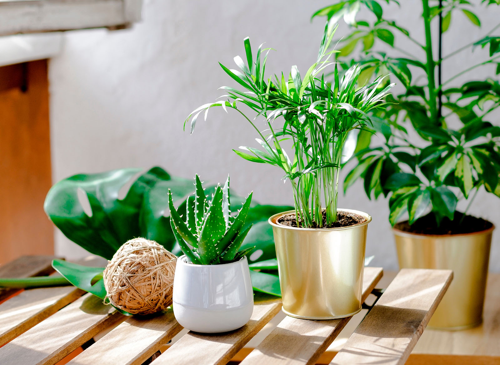 How To Bring Your Outdoor Plants Inside For The Season