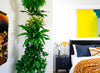 Creating A Living Wall In A Guest Bedroom