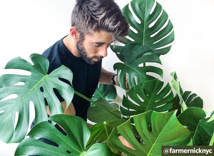 Q&A: Urban Gardening with @farmernicknyc