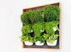 Inspiration: Frame Your Vertical Gardens