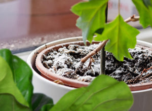 A Guide to Fungus and Houseplants (What's Harmful and What's Not, and How To Fix It)