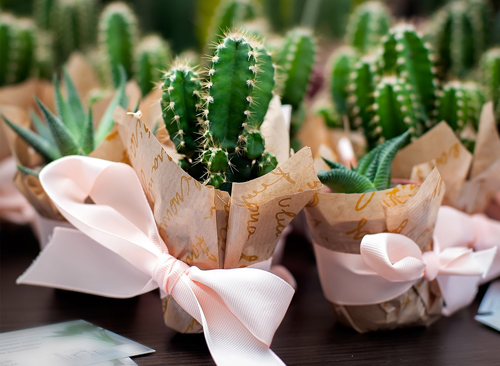 Houseplant Gifting Guide