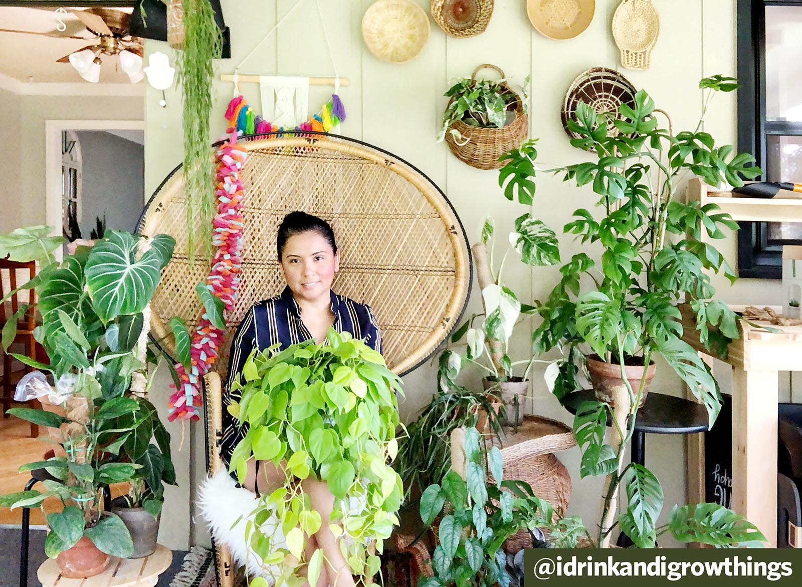 Q&A: Plant Care Tips and Insight with @idrinkandigrowthings