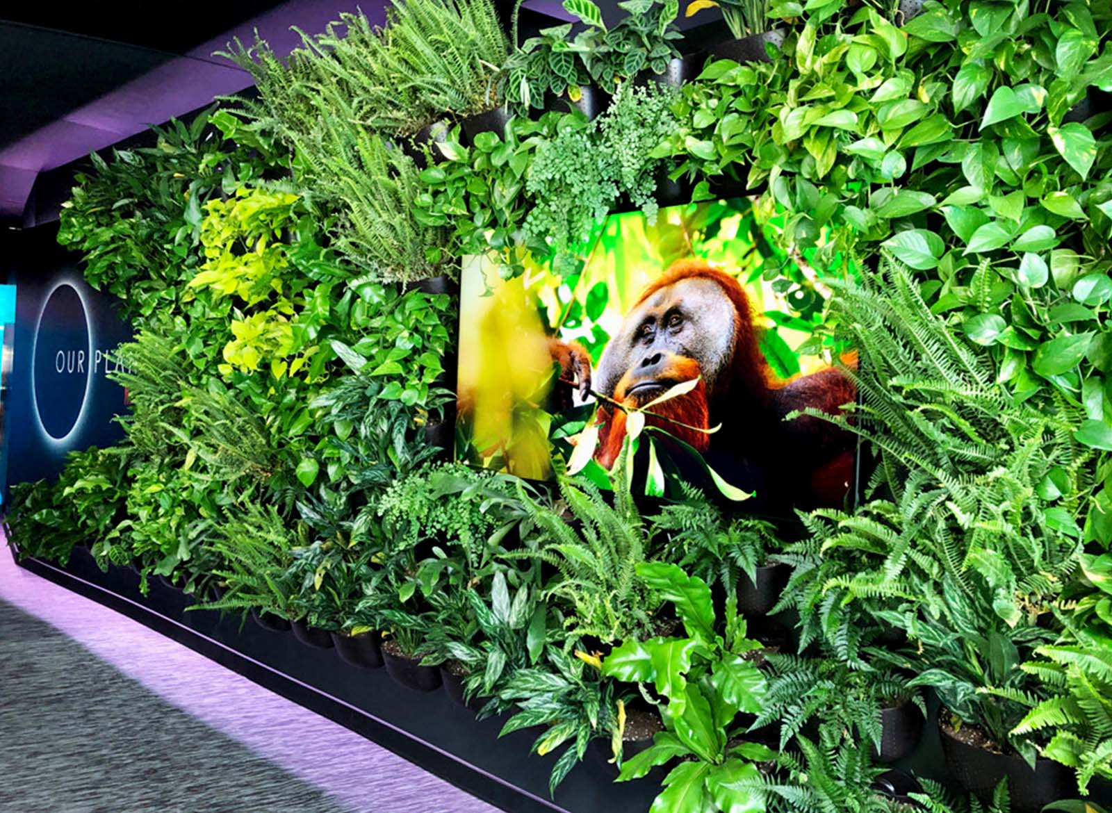 Wally Eco Vertical Garden by Greenery NYC at Our Planet Exhibition, Dolby SoHo