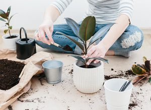 Stay At Home Plant Activities