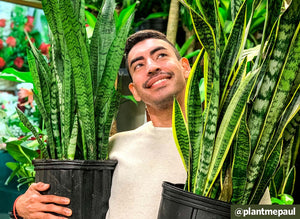 Q&A: Teaching the Science of Plant Care with @plantmepaul