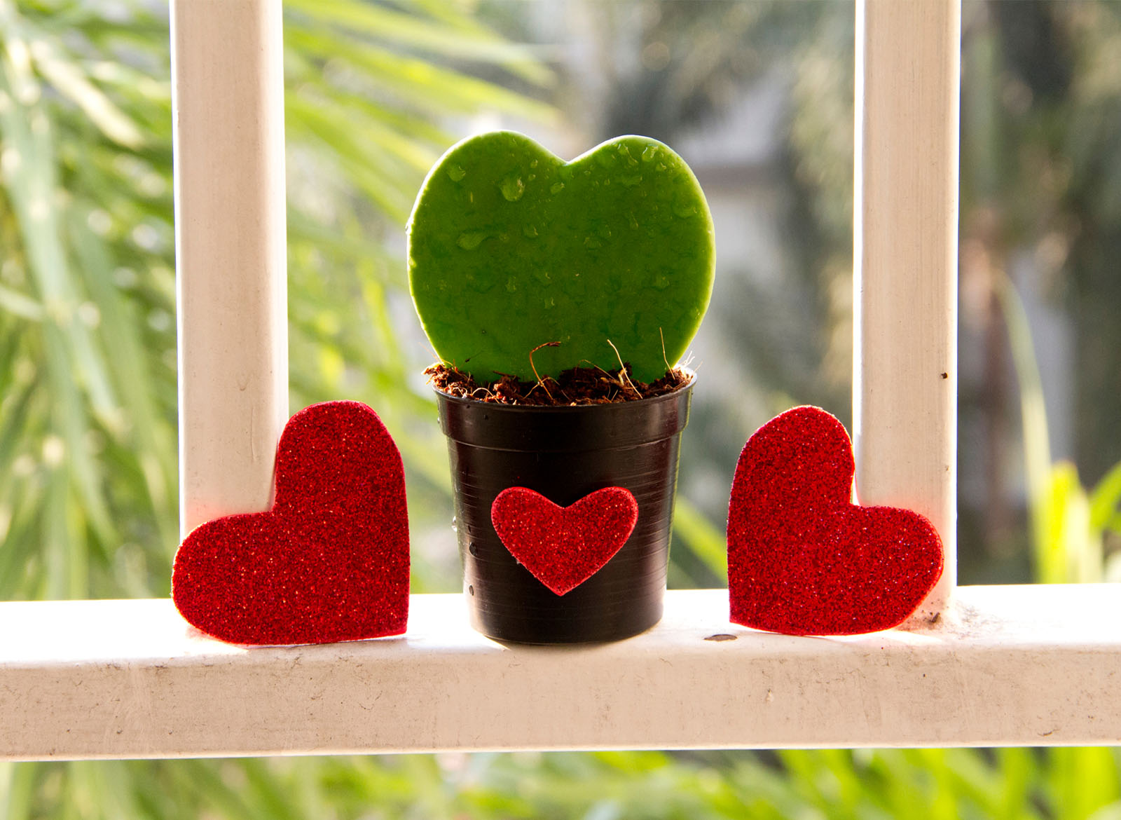 Our Top 5 Most Romantic Houseplants to Give as Gifts