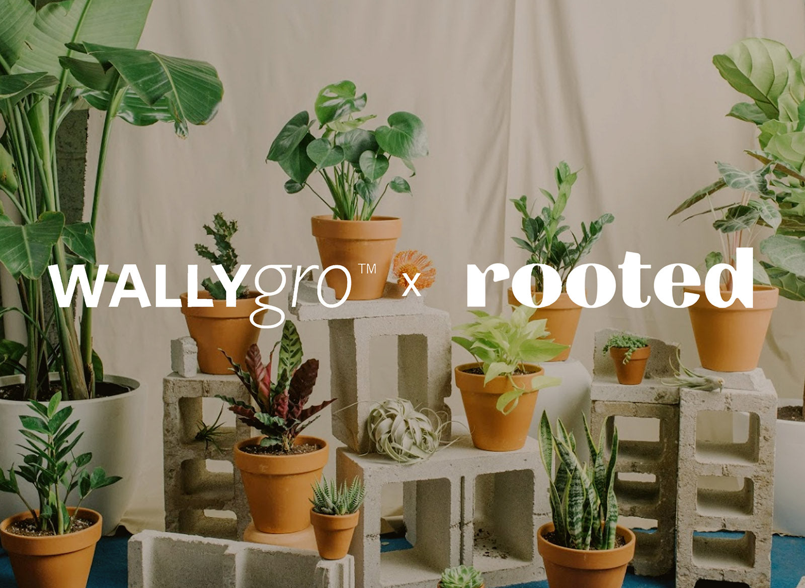 WallyGro x Rooted NYC: Vertical Plant Care 101