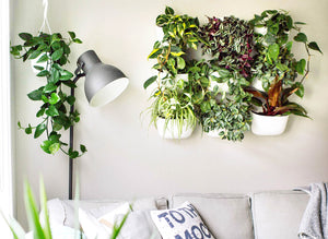 Wally Eco Spacing Guide: 5 Standard Layouts For Your Vertical Garden