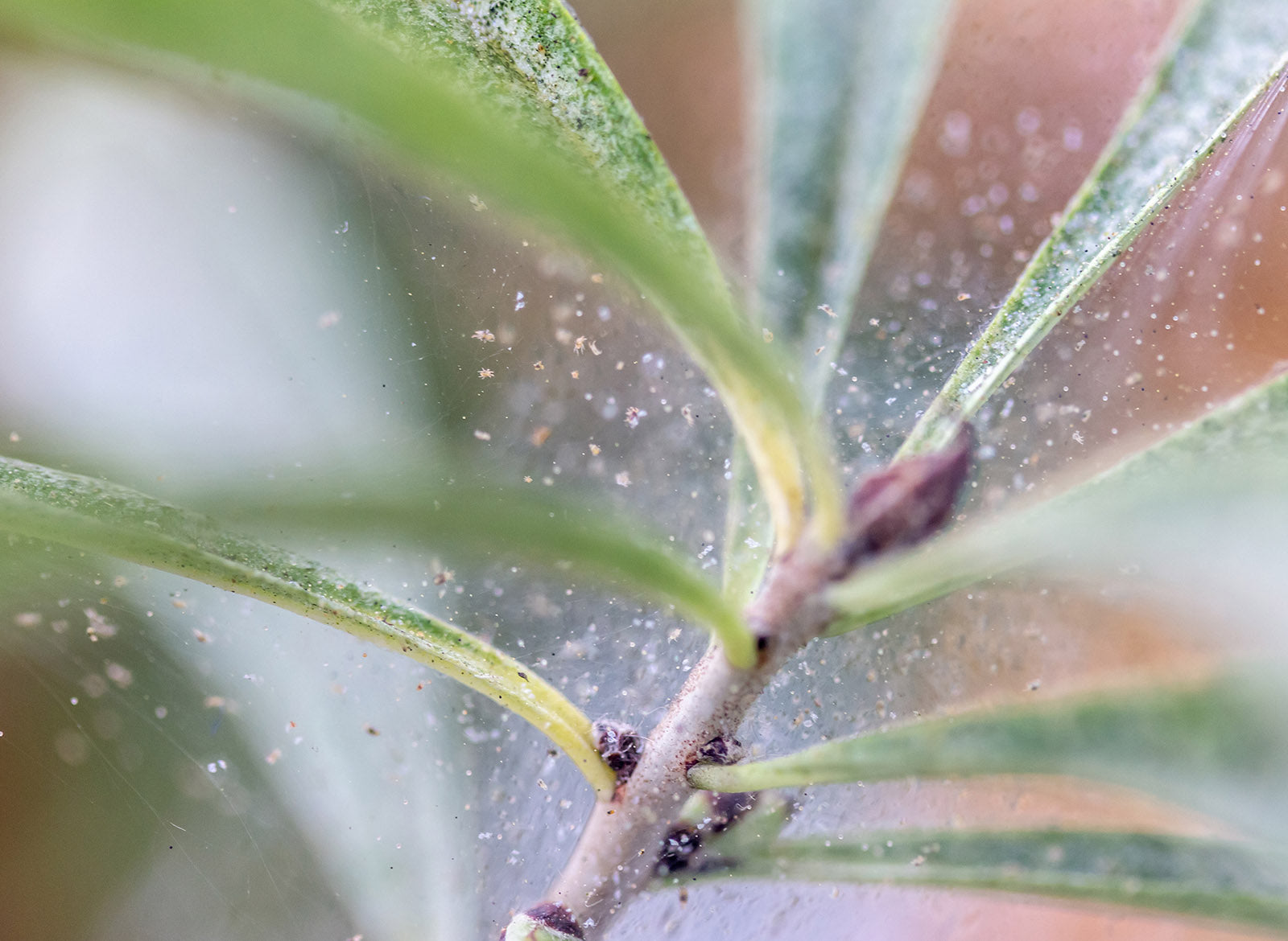 How To Get Rid Of Spider Mites On Houseplants