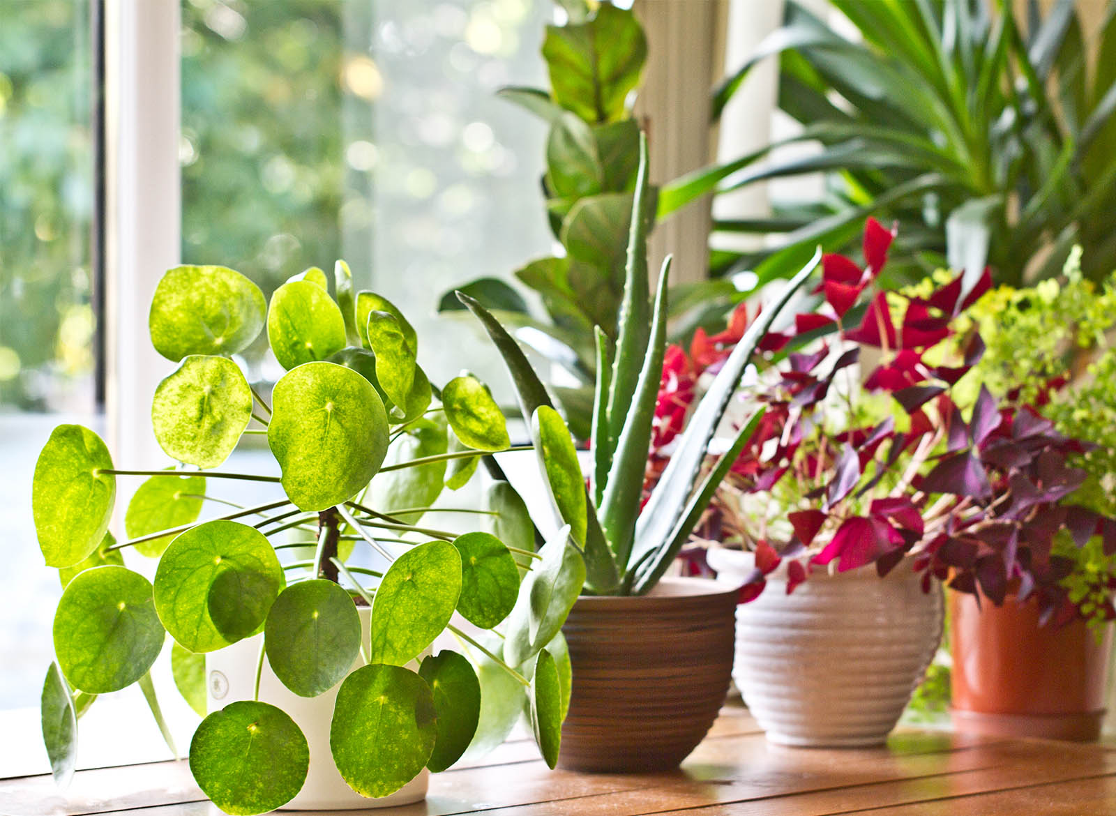 10 Most Popular Houseplants For Spring: Our Predictions
