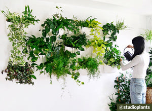 From Unboxing to 3 Months Later: the Living Wall Experience with @studioplants