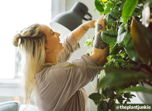 Q&A: How to Care For Plants in Cold Weather with @theplantjunkie