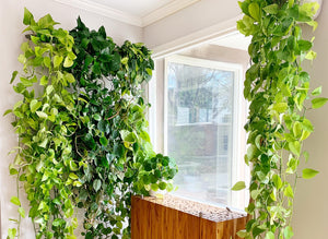 5 Powerful Ways To Get The Trails Of Your Dreams In Your Vertical Garden