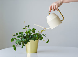 Over or Under Watering? The Essential Guide To Watering Your Houseplants
