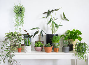 Which Houseplants Will Be Hot This Fall? 2020 Predictions